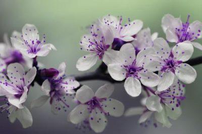 sennik kwiaty