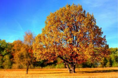 sennik drzewo