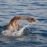 Sennik pływać