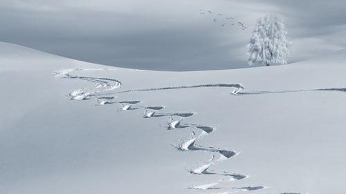 Sennik śnieg